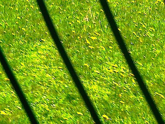 herbes fleurs