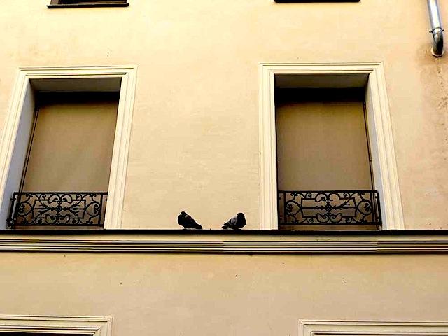 9-deux_pigeons