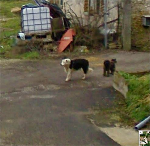 brachay 17 2 chiens