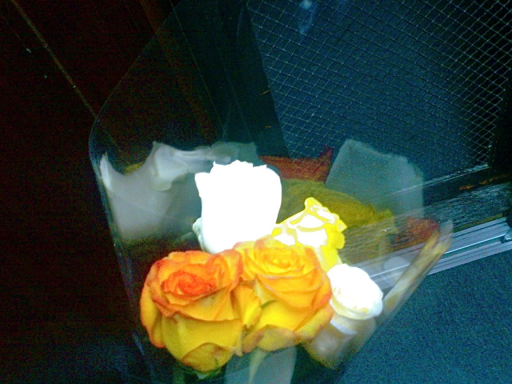 roses 310712