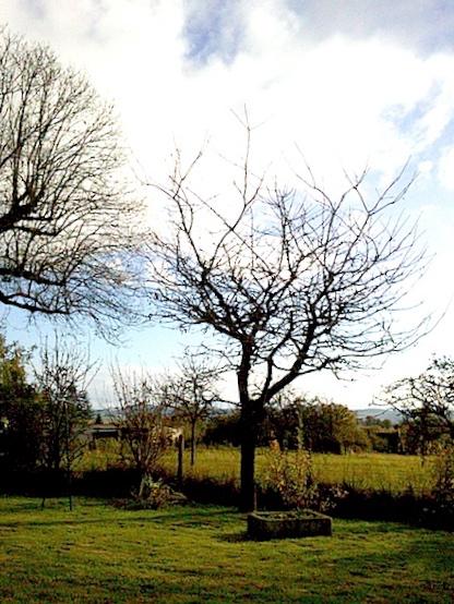 arbres 1