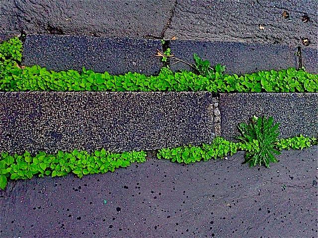 10 herbes