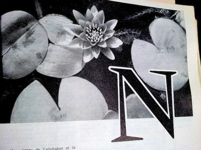 nénuphars 2