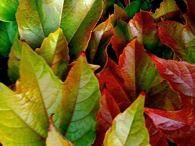 feuilles 2