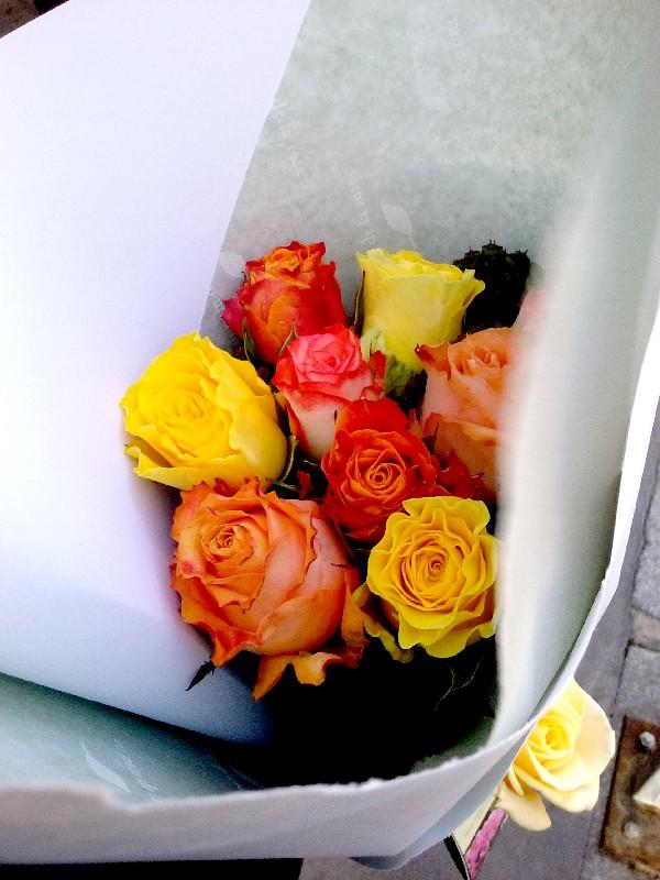 roses 13 11 15