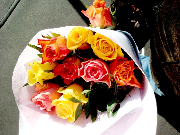 roses 15 01 16