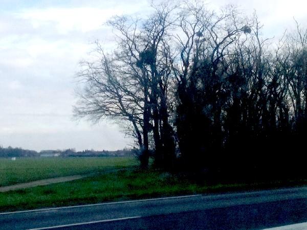 10 Atelier 2 arbres route