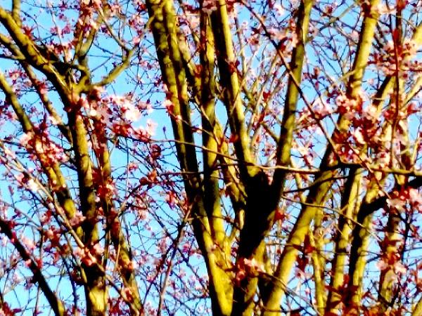 Vernoux fleurs 2