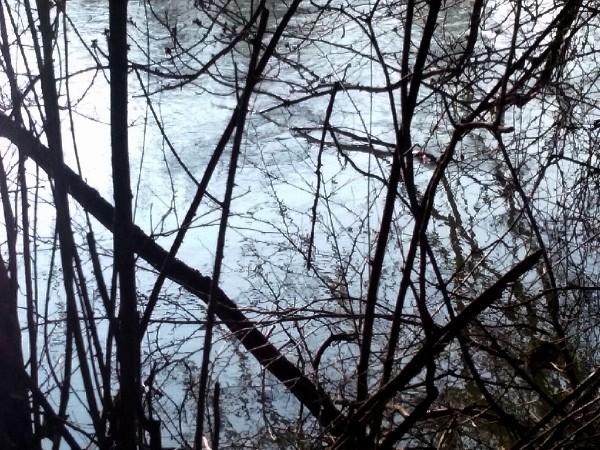 bords de l'eau reflet