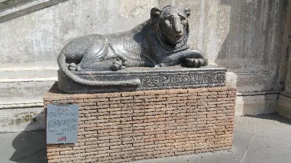 Lion Olivie OKr