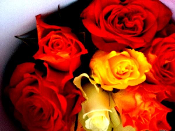 roses 23 mai 2