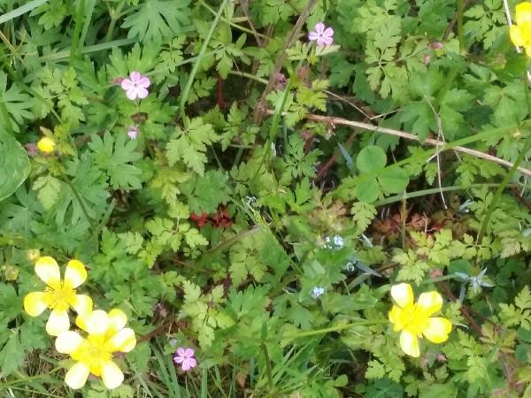 sgdc fleurs 2