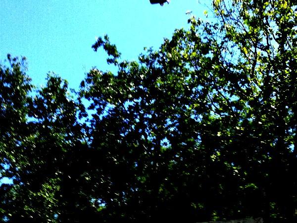 manif 5 arbres