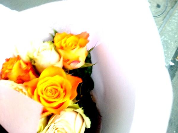 rose du 3 06 16
