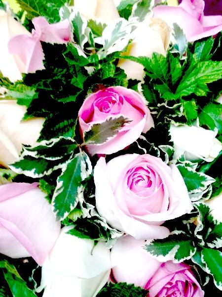 roses 4 7 16
