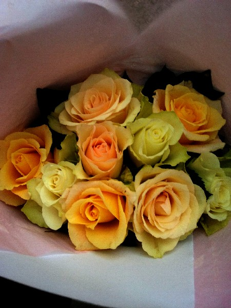 roses 6 9 16 2