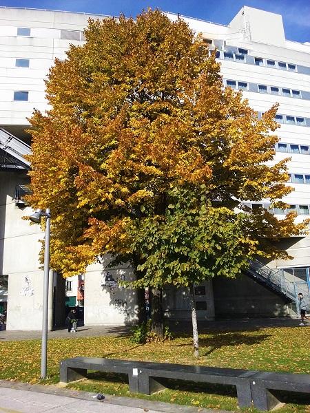arbre-villette-2