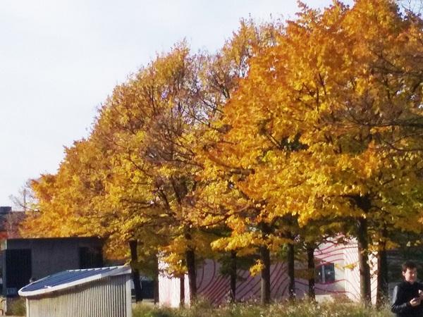 arbres-villette-1