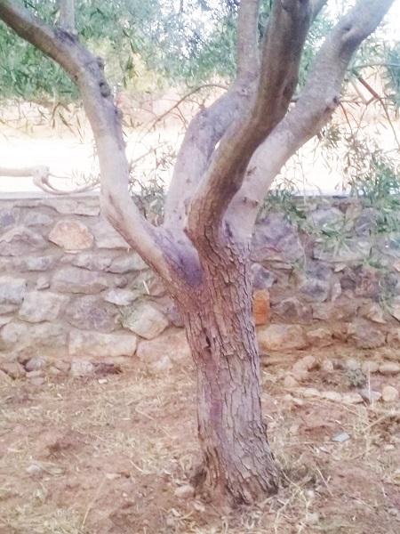 olivier-12
