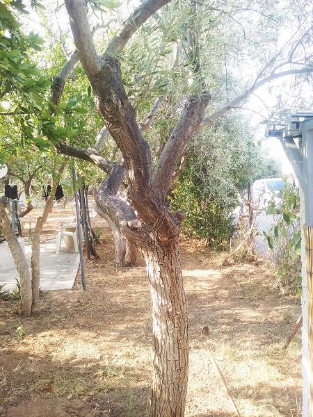 olivier-20