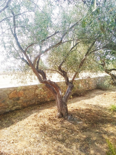 olivier-31