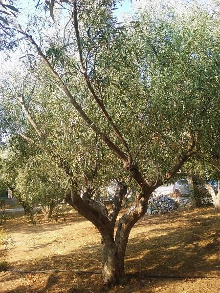olivier-35