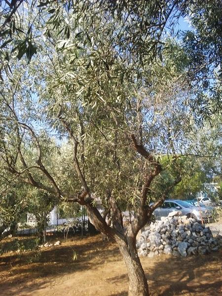 olivier-40