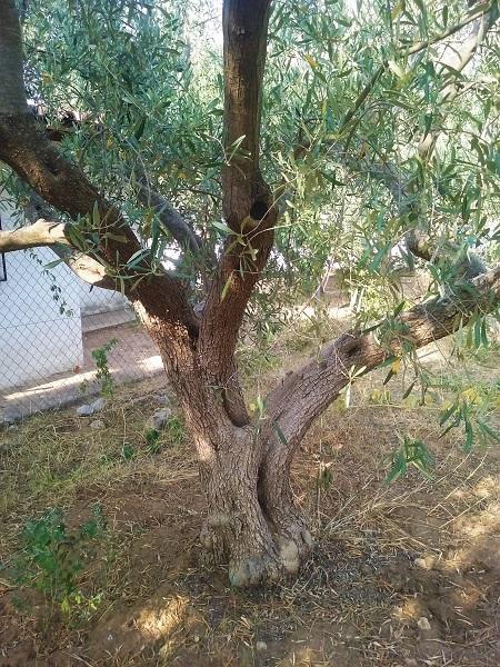 olivier-45
