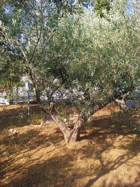 olivier-47