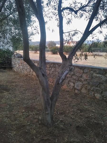 olivier-6