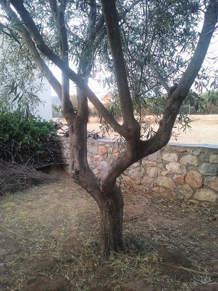 olivier-7