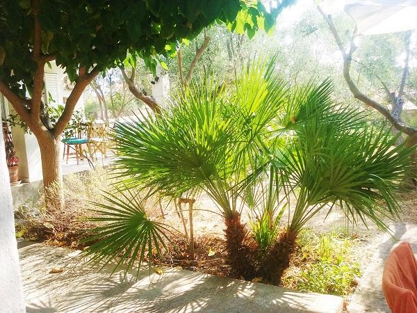 palmiers-22