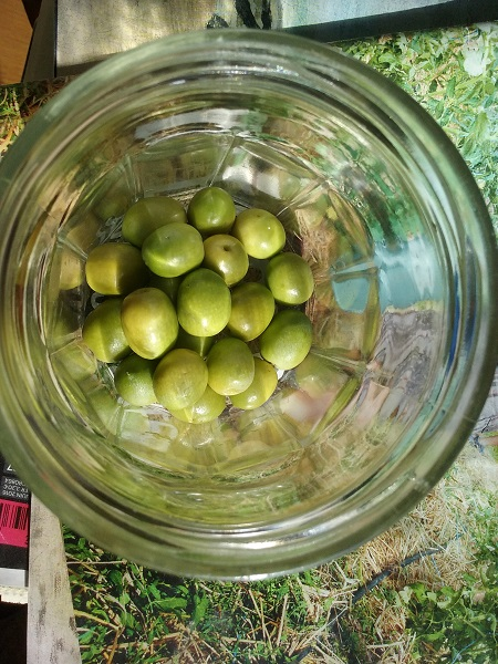 recolte-olives-15-10
