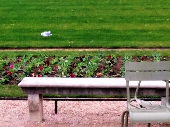 mouette-pelouse