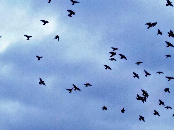 oiseaux-ciel