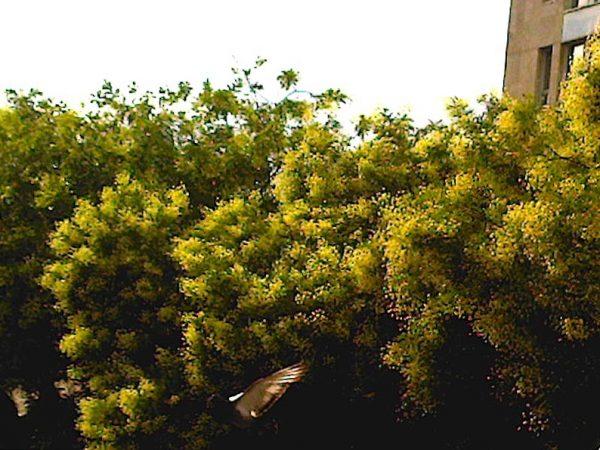 arbres-belleville