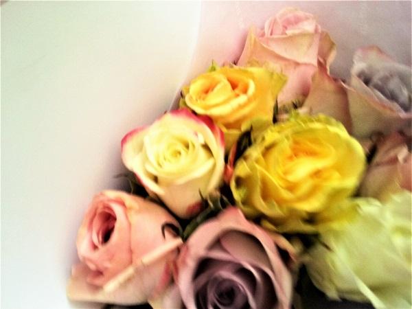 roses-du-05-12-16
